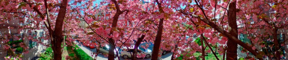 Inside a Pink Blooming Tree
